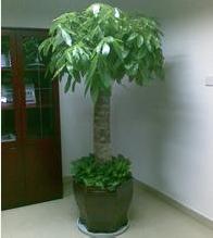 三杆发财树